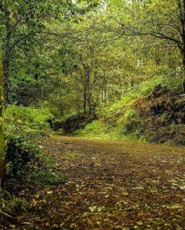 camino portugues 5945 p