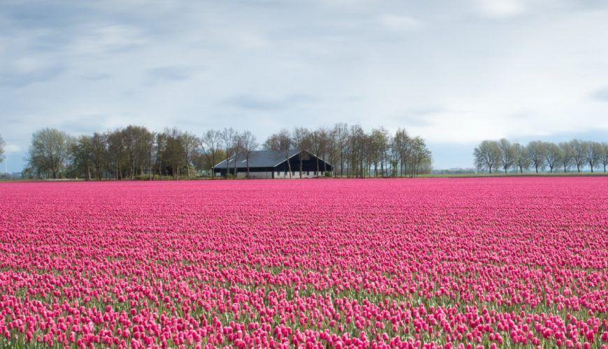 waw_travel_visit_nederland